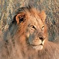 Win a trip for two to Kenya's Maasai Mara